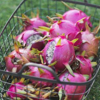 Fresh Dragon fruit - what is dragon fruit @EatBetterRecipes